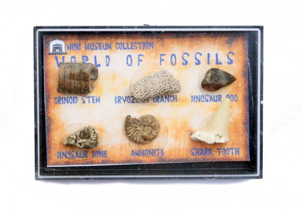Fossil Collection Dino Poo