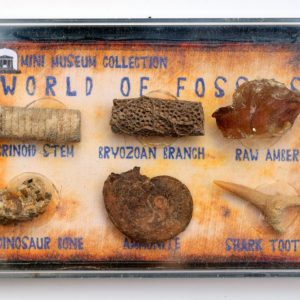 fossil collection amber box