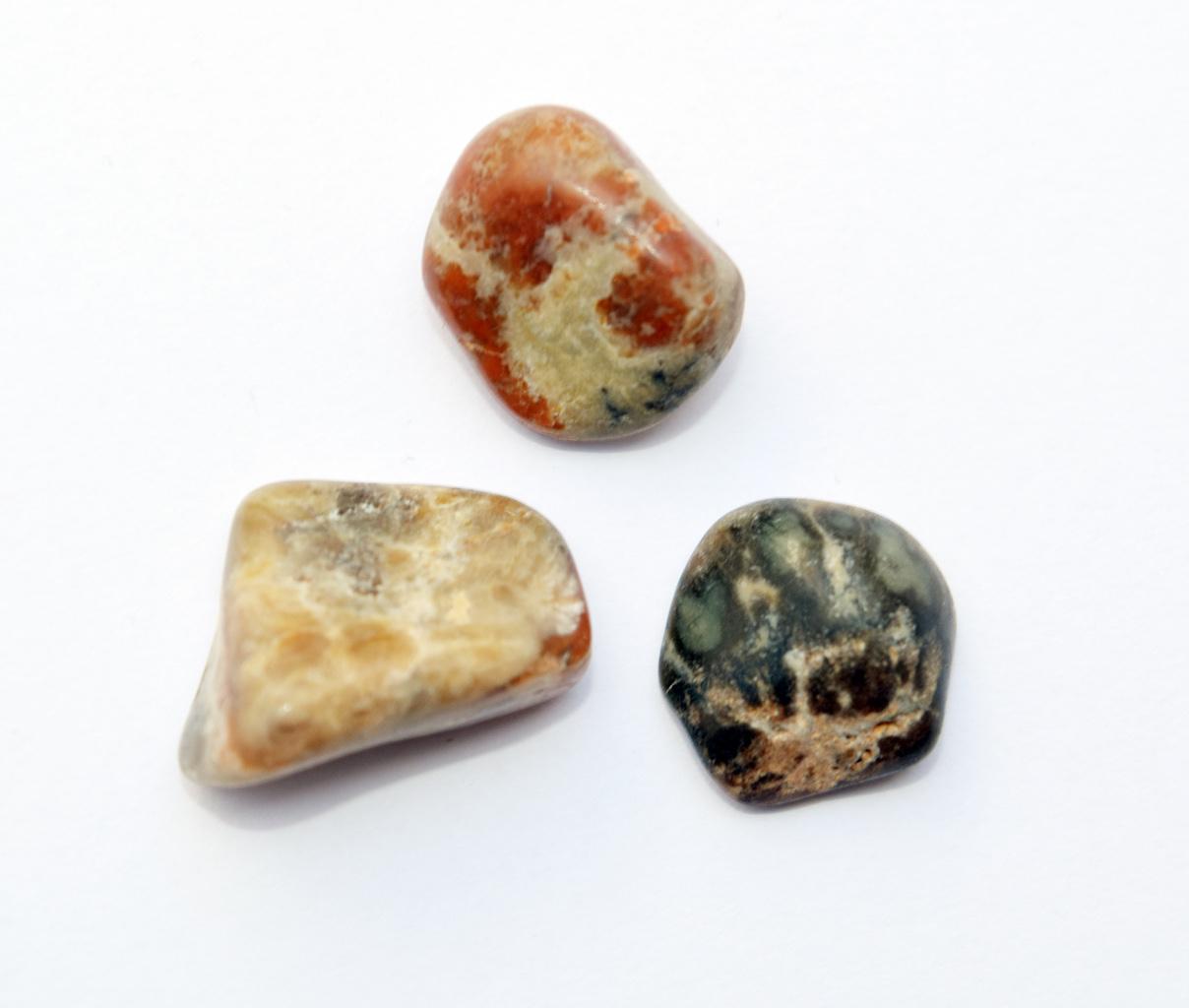 peices_fossilized_dinosaur_poo_coprolite_jurassic_jacks