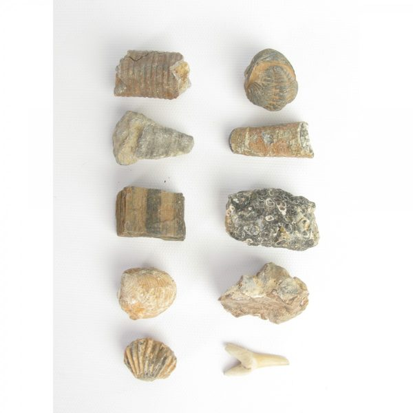 10 fossil collection jurassic jacks