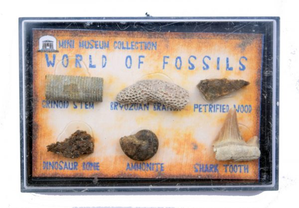 fossil_collection_box_petrified_wood