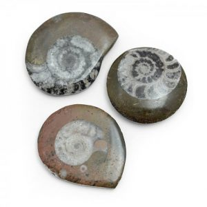 goniatite_button_fossil