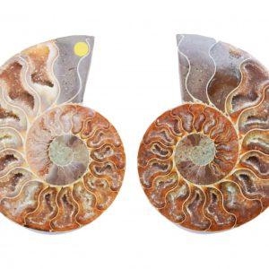 Cleoniceras Ammonite Pair large_quartz_ammonite_pair