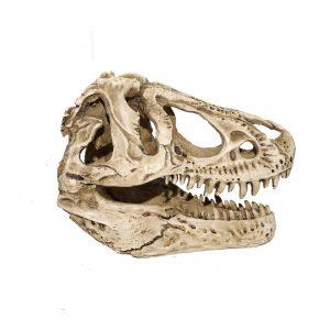 T Rex Skull white tyrannosaurus_rex_skull_replica1-14_scale_white_jurassic_jacks