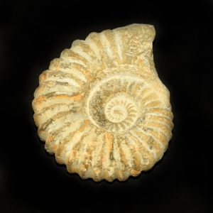 agadir_ammonite_jurassic_jacks