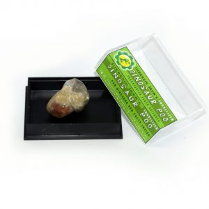Dinosaur Poo Box _20mm_3-1024x843