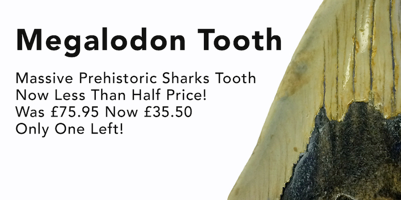 bargain_megalodon_tooth_offer_ jurassic jacks