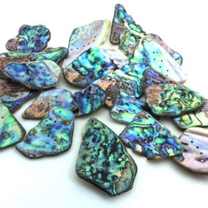 paua shell new_zealand_pieces Jurassic jacks