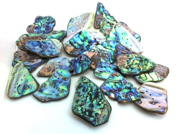 paua shell new_zealand_pieces Jurassic jacks