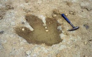 dinosaur foot print_