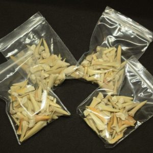 Fossil Sharks Teeth Bag