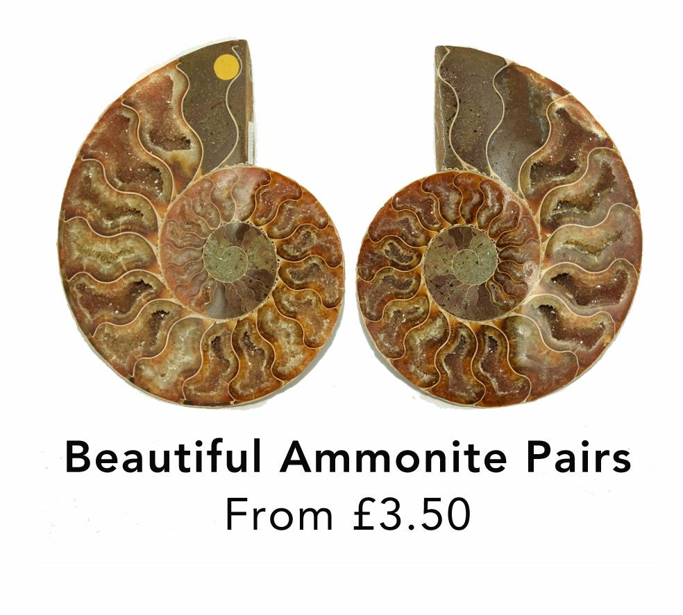 ammonites jurassic jacks