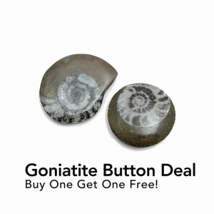 goniatite_button deal