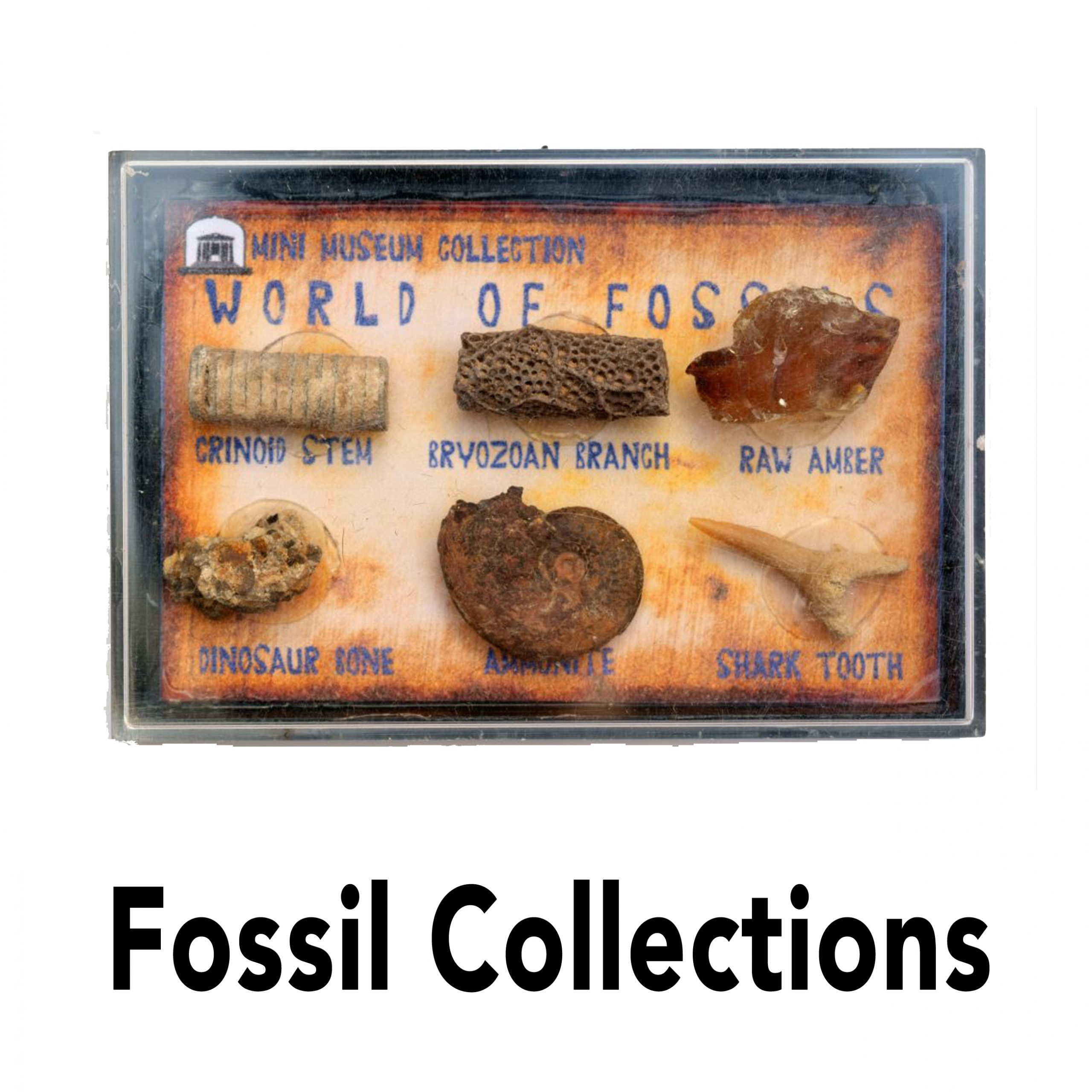 jurassic jacks fossil box