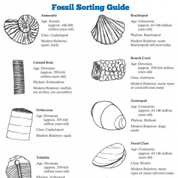 fossil_sorting_guide