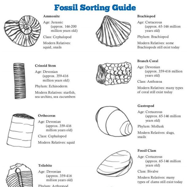 Fossil Sorting Kit