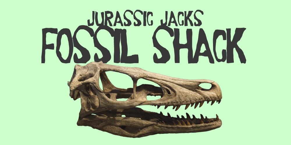 jurassic jacks fossil shack