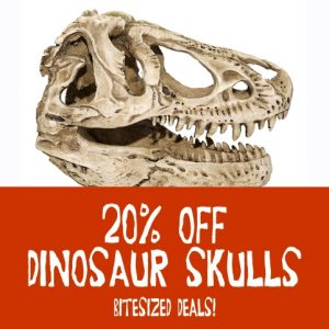 dinosar_skulls_discount_may2019_sq