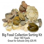 fossil_sorting_kit_big