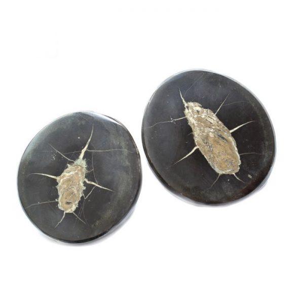 pyritised-fish-coprolite