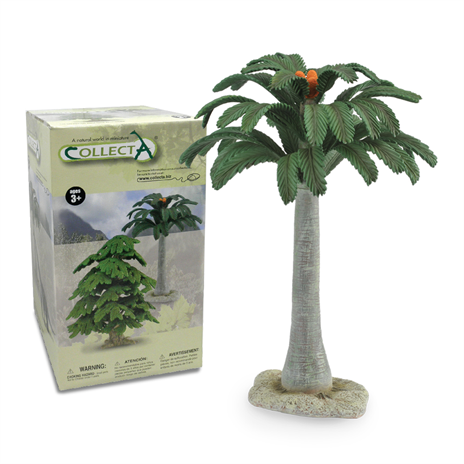 cycad tree