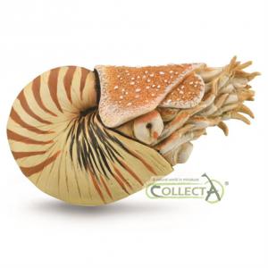 Nautilus Pompilius model